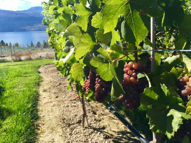 South Okanagan Wine Tours - Lets Go Wine Tours