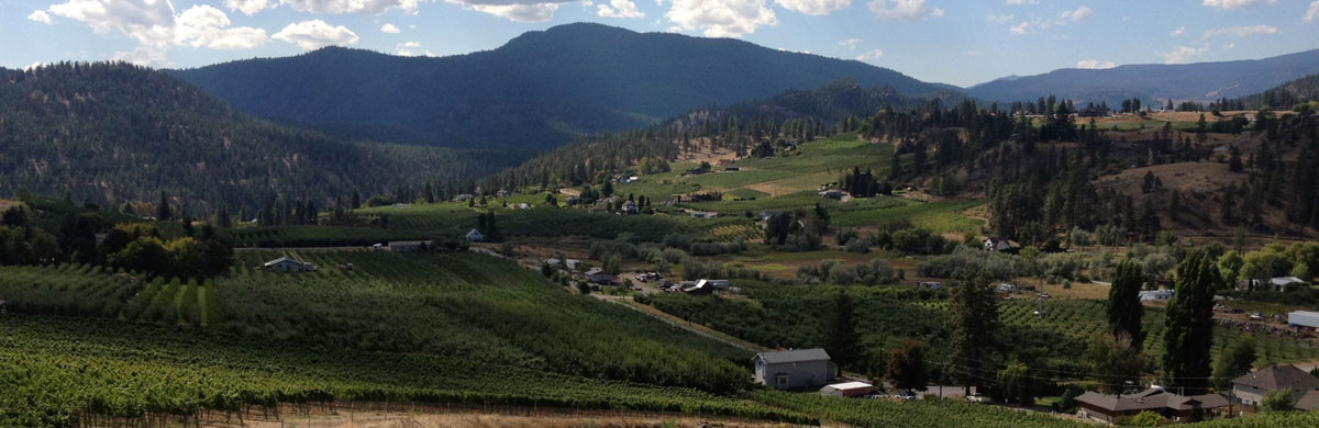 View of the vineyards in the Okanagan Valley